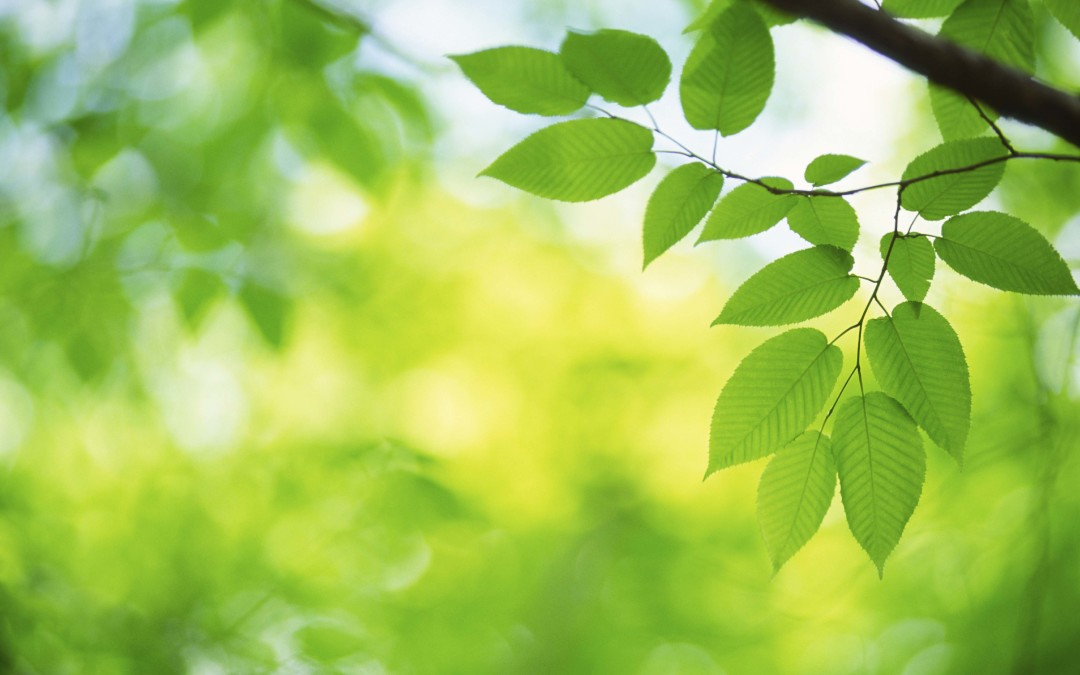 A Little Encouragement Today – Your Leaf Shall Not Wither