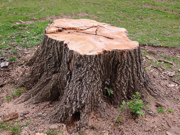 Chop Down the Tree but Leave It's Stump - PERSEVERE